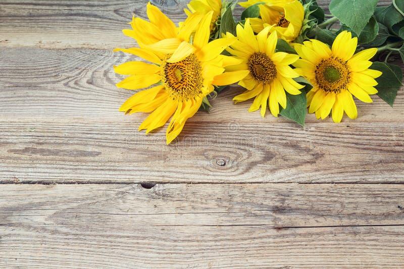 Tło z żółtymi słonecznikami na starych drewnianych deskach fotografia royalty free