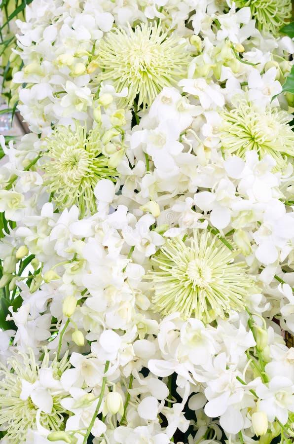 Tło z białego kwiatu dekoracją fotografia royalty free