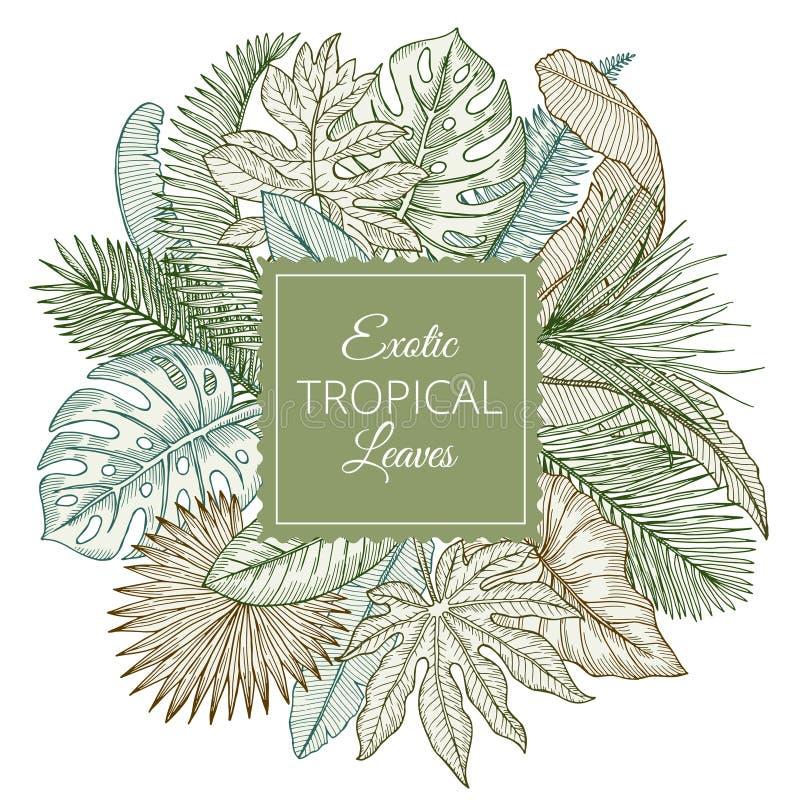 Tło z różnymi egzotycznymi tropikalnymi liśćmi i dżungli palmami Ręki rysować wektorowe ilustracje ilustracja wektor