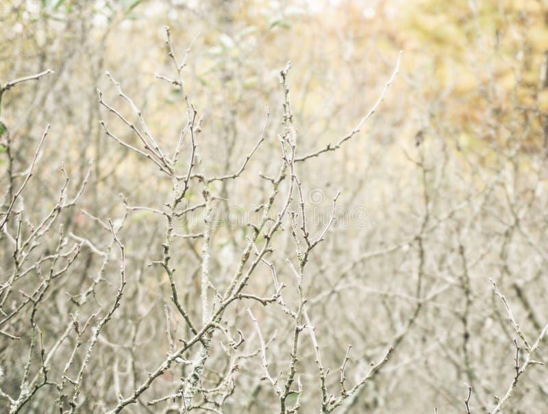 Tło z szarość przerastającymi krzakami i drzewami obrazy royalty free