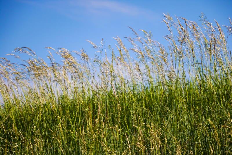 Tło z trawą przeciw pogodnemu niebieskiemu niebu, selekcyjna miękka ostrość obrazy stock