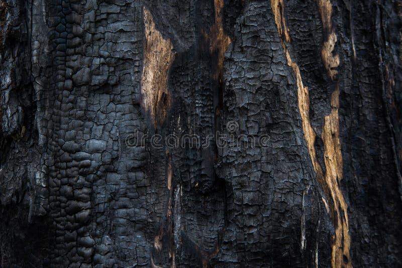 Tło, zakończenie palący drewno Przypalający drzewo, burnt drewniana tekstura obraz stock