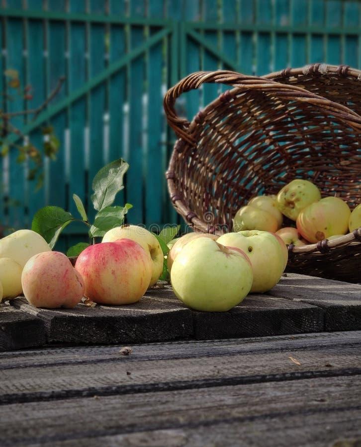 Tło zamazane Jabłka dojrzałe układane są na szarych, drewnianych deskach Wasp on Apple Kosz wiklinowy brązowy z czerwonym zdjęcia royalty free