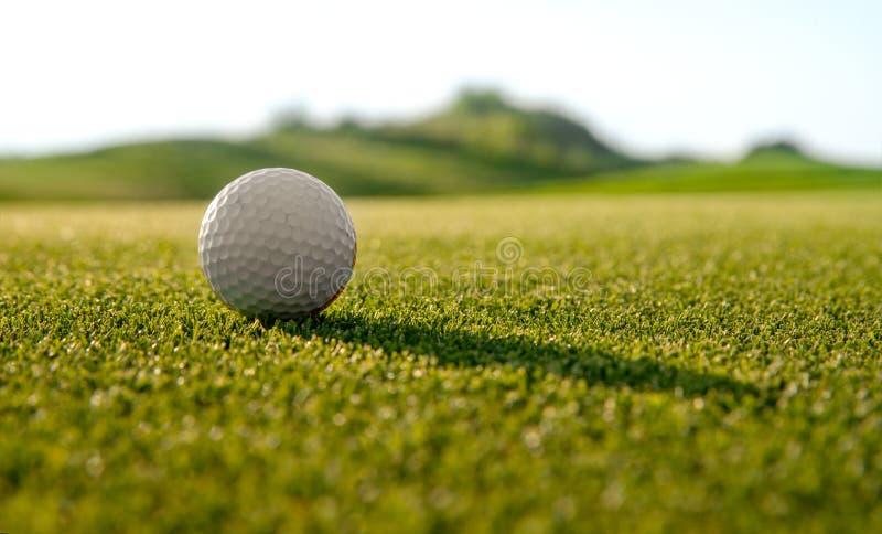 Tło zielonej trawy zdjęcie royalty free