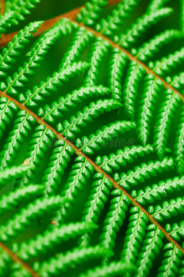 Tło zielony liść obrazy royalty free