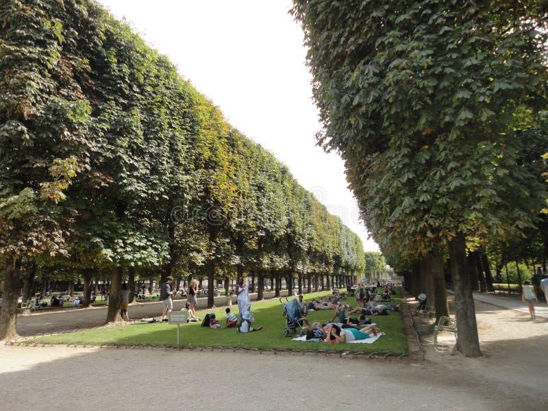 Tłum ludzie z drzewami i krzakiem zdjęcia stock