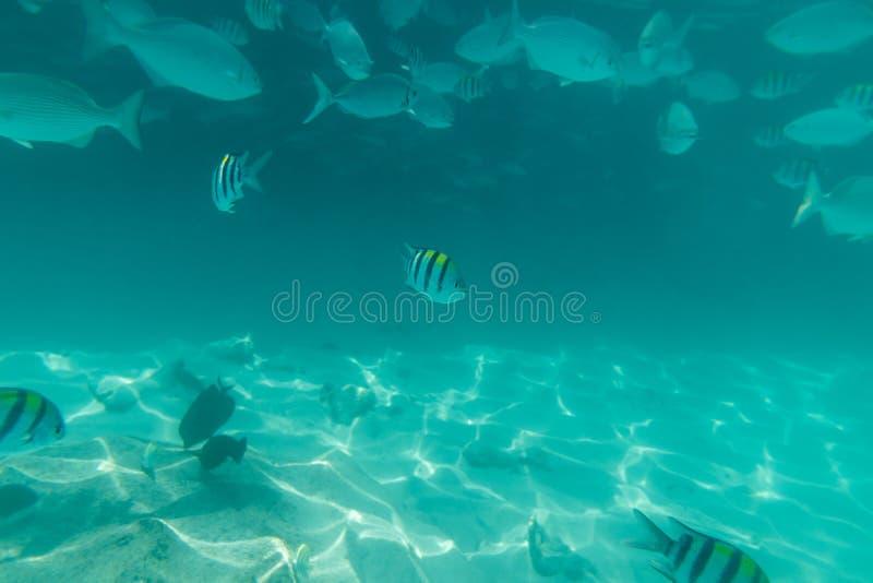 Tłumy ryba pod wodą w oceanie Słońce promieni pośpiech dno obraz stock