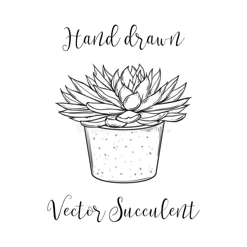 Tłustoszowata roślina w betonowym kwiatu garnku Ręka rysująca czarny i biały wektorowa ilustracja ilustracja wektor