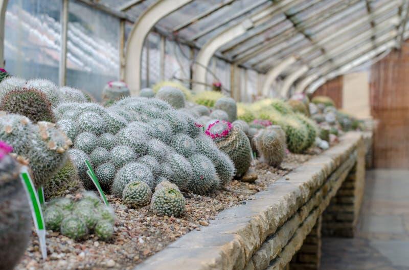Tłustoszowaty glasshouse Kaktusowa szklarnia w ogródzie botanicznym w W zdjęcie royalty free