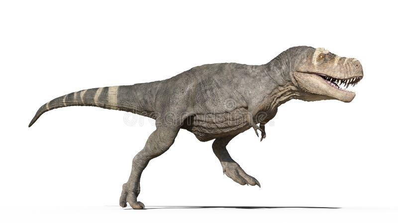 T雷克斯恐龙,暴龙雷克斯爬行动物赛跑,在白色背景隔绝的史前侏罗纪动物,3D翻译 皇族释放例证