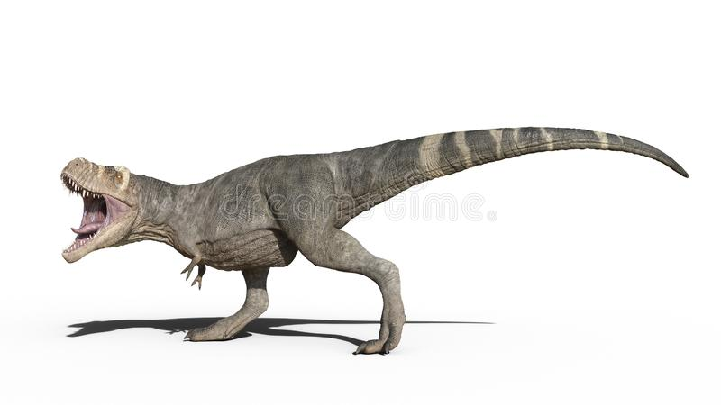T雷克斯恐龙,暴龙雷克斯爬行动物,走在白色背景,3D的史前侏罗纪动物翻译 向量例证
