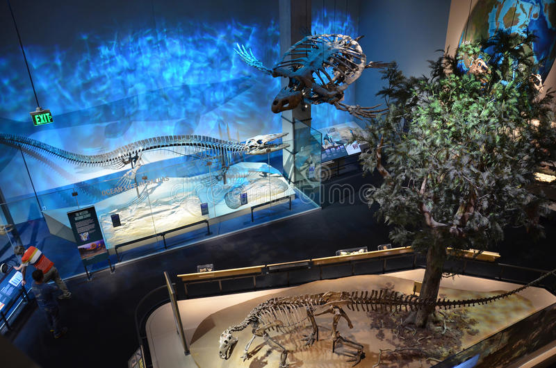 Dallas Museum Of Nature And Science Prices
