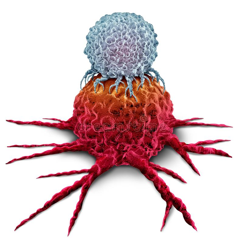 T Cell Attacking Cancer Tumor. T cell attacking a cancer tumor as an Immunotherapy immune system therapy concept as a biomedical or biomedicine oncology vector illustration