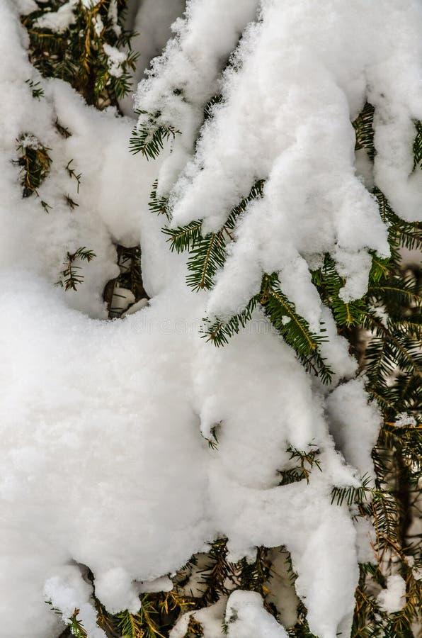 For?t congel?e  photos libres de droits