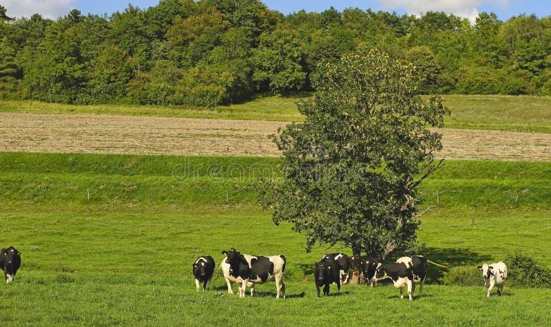 ?t? dans la Bourgogne, France photos libres de droits