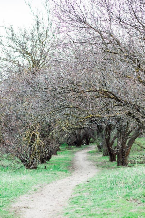 For?t de ressort, arbres sans feuilles et herbe verte images libres de droits