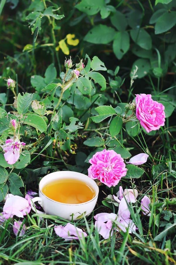 T? en estilo rural en jard?n del verano en el pueblo Taza de Vintafe de infusi?n de hierbas verde y de rosas rosadas florecientes foto de archivo libre de regalías