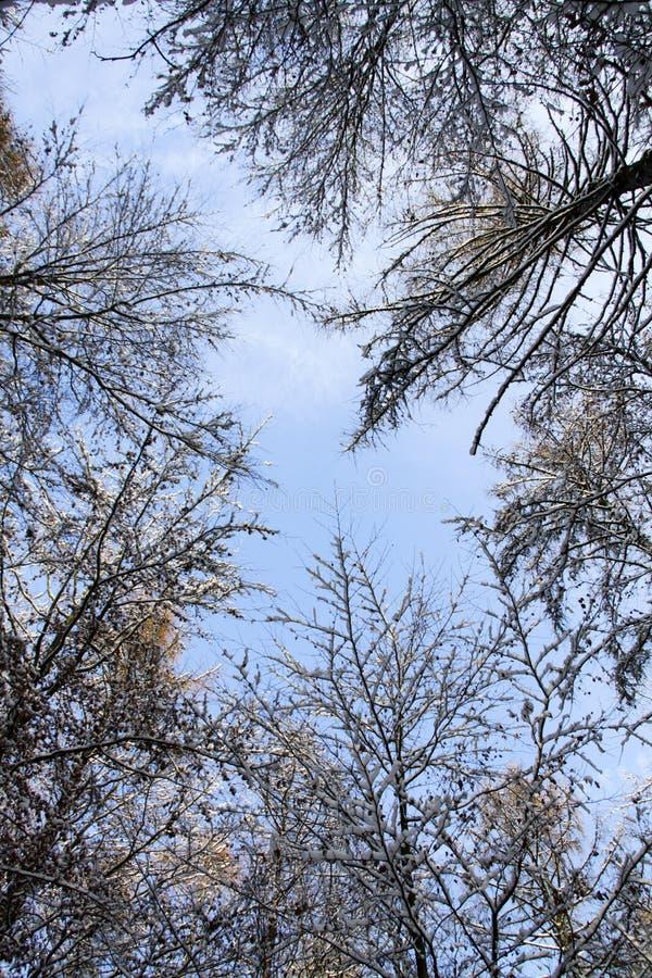 For?t en hiver image libre de droits