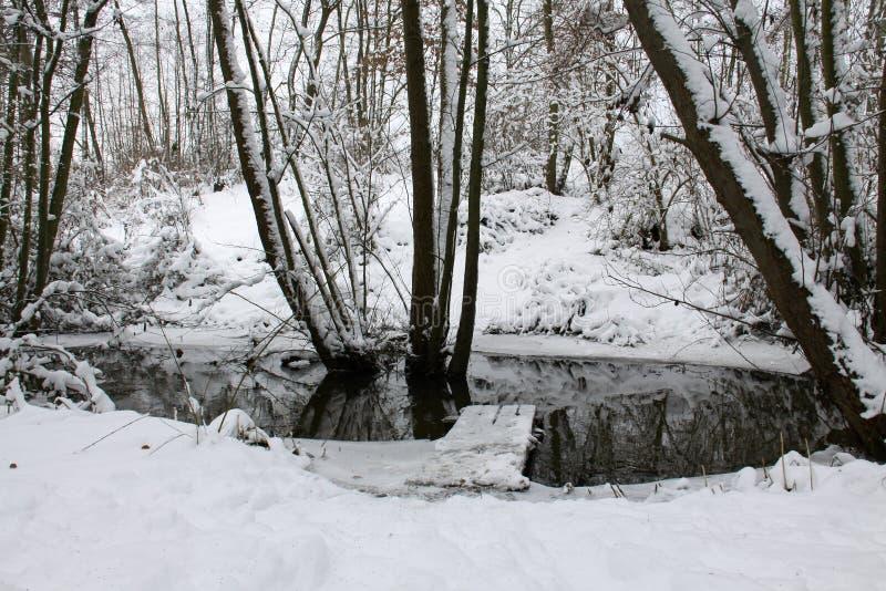 For?t en hiver photo libre de droits