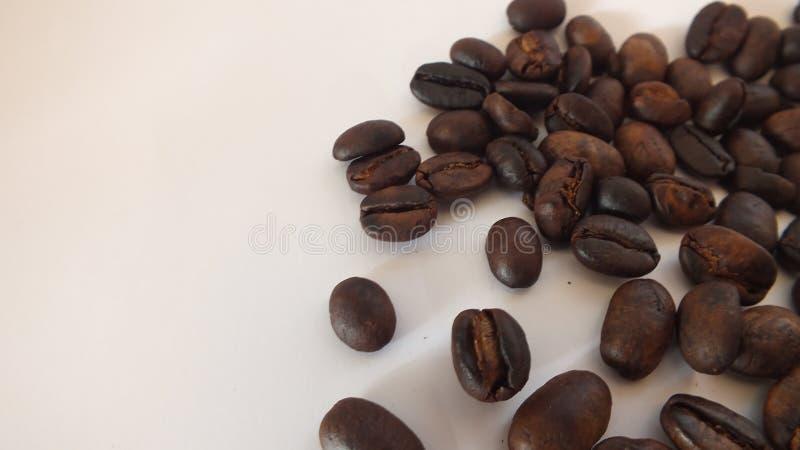 t?a fasoli kawowy biel zdjęcia stock