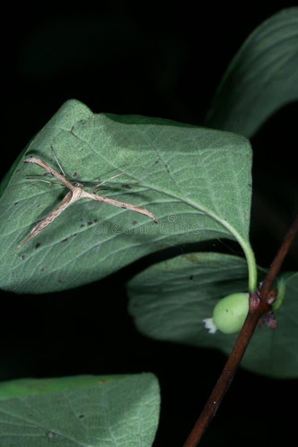 T gevormde mottencamouflage stock foto