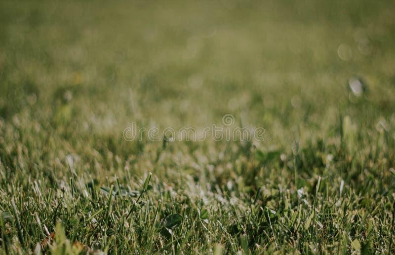 t?t gr?sgreen upp h?rlig lawn E Bakgrund med gr?s fotografering för bildbyråer