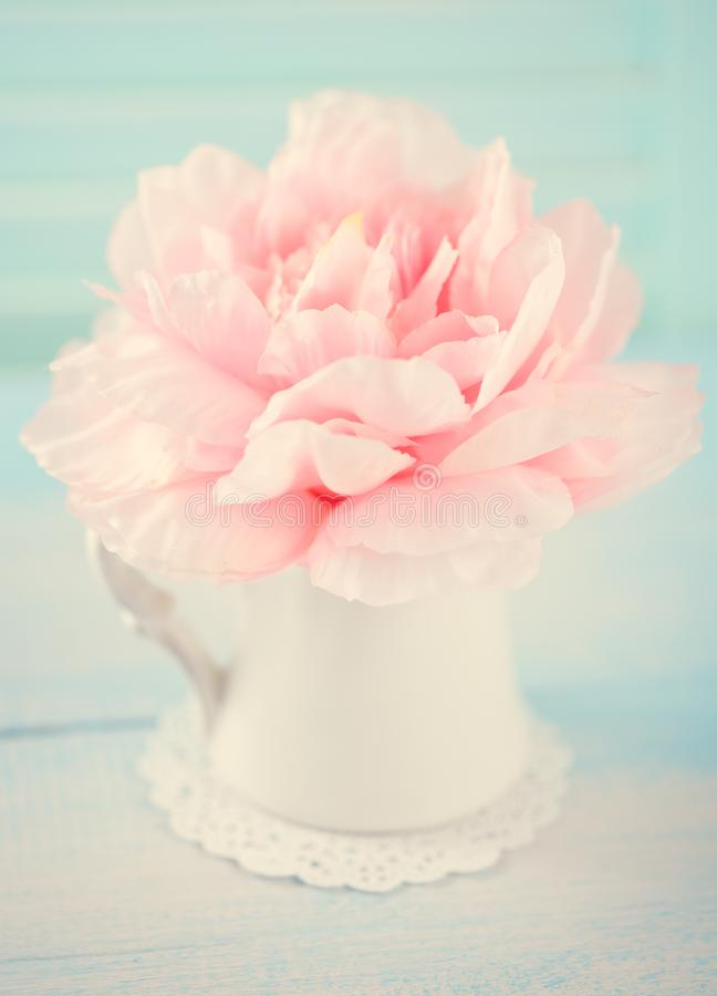 t?a kwiatu peoni biel zdjęcie stock