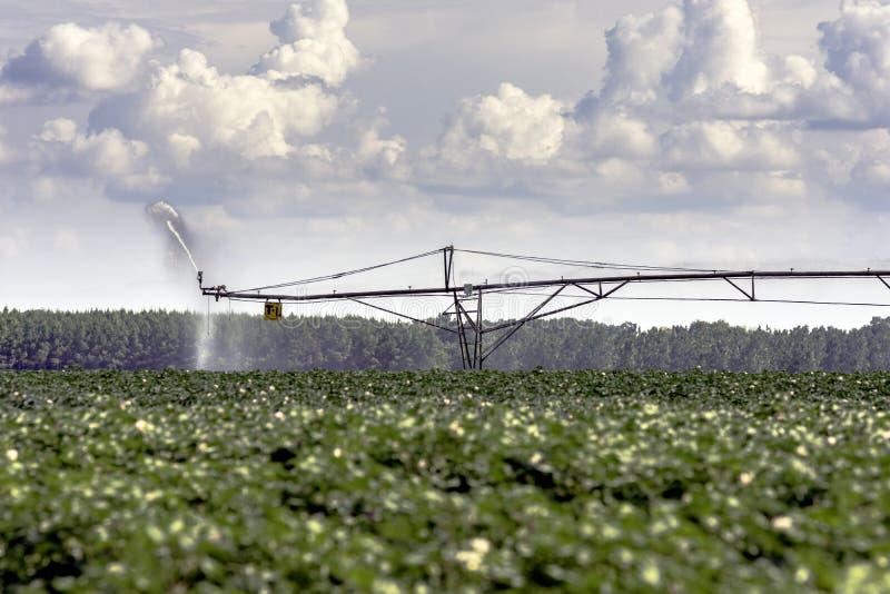 T-L Irrigation em um campo do algodão fotos de stock royalty free