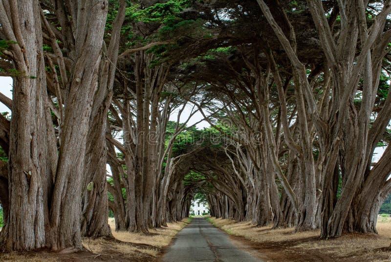 T?nel da ?rvore de Cypress foto de stock