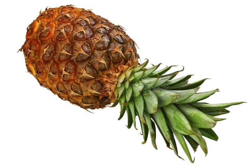 Download Tło ananas obraz stock. Obraz złożonej z pomarańcze, juiced - 13341199