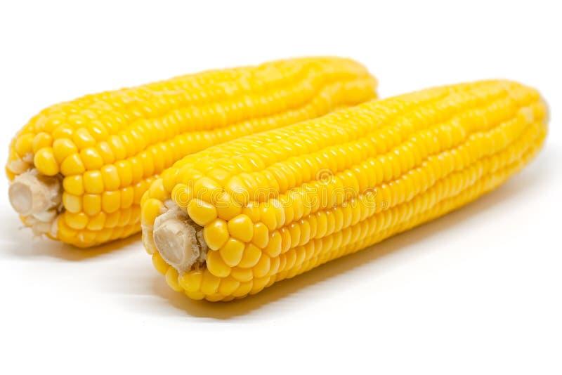 t?o biel kukurydzany s?odki obrazy stock