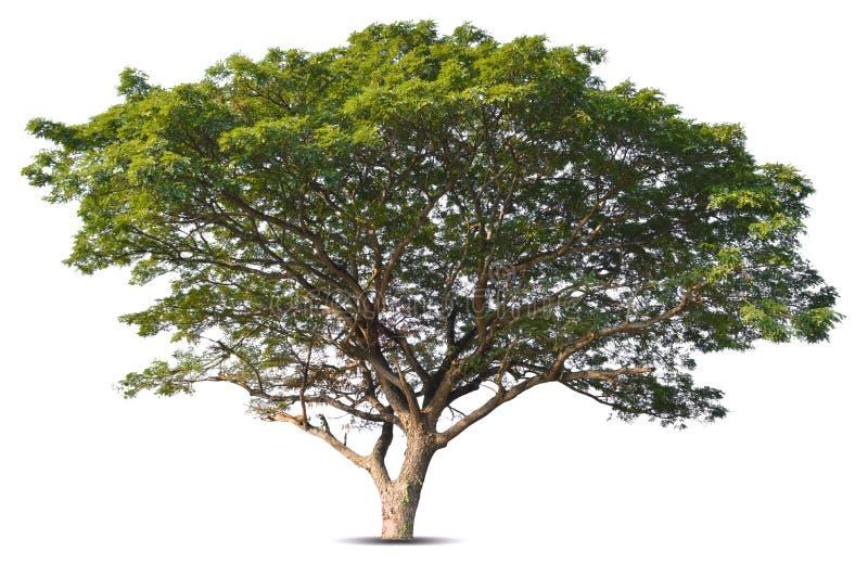 t?o biel odosobniony drzewny zdjęcia royalty free