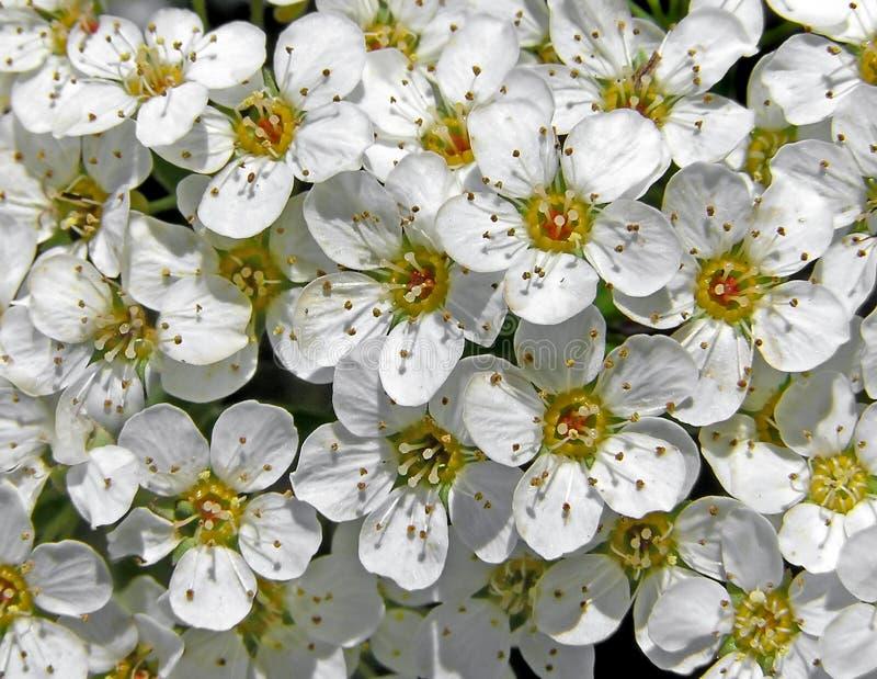 Download Tło kwiecisty obraz stock. Obraz złożonej z kwiaciarnia - 132259