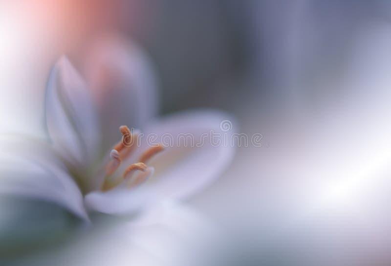 t?o natura pi?kna zielona Abstrakcjonistyczna Artystyczna tapeta Sztuki Makro- fotografia wiosna kwiat Zadziwiaj?ca Kwiecista fot zdjęcie royalty free