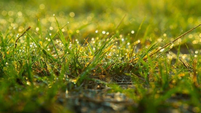 T?o rosa krople na jaskrawym - zielona trawa obraz stock