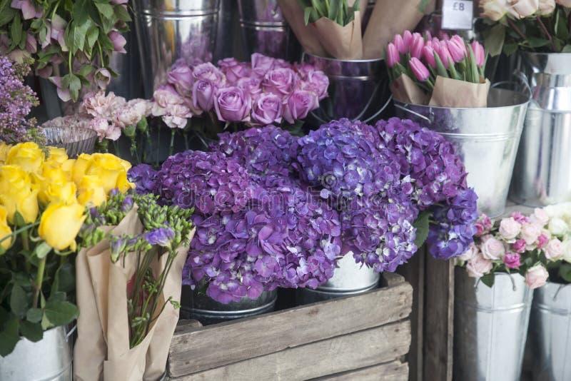 T?pfe mit sch?nem bl?hendem Rosa und purpurrote Hortensieblumen f?r Verkauf au?erhalb des Blumenladens Gartenspeichereingang verz lizenzfreies stockfoto