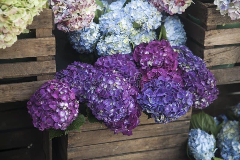 T?pfe mit sch?nem bl?hendem Rosa und purpurrote Hortensieblumen f?r Verkauf au?erhalb des Blumenladens Gartenspeichereingang verz lizenzfreie stockbilder