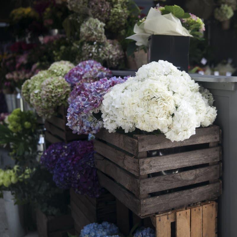 T?pfe mit sch?nem bl?hendem Rosa und purpurrote Hortensieblumen f?r Verkauf au?erhalb des Blumenladens Gartenspeichereingang verz lizenzfreie stockfotografie