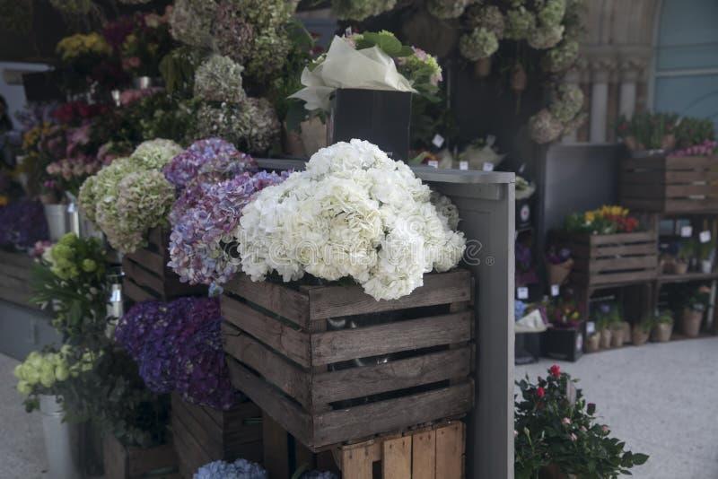 T?pfe mit sch?nem bl?hendem Rosa und purpurrote Hortensieblumen f?r Verkauf au?erhalb des Blumenladens Gartenspeichereingang verz stockfotos