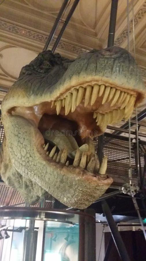 T-rex royaltyfri foto