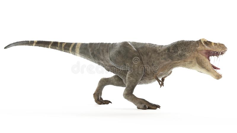 A T-rex. 3d rendered medically accurate illustration of a T-rex royalty free illustration