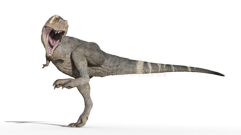 T-Rex dinosaur, Tyrannosaurus Rex gad chodzi tupiąc, prehistoryczny Jurajski zwierzę odizolowywający na białym tle, 3D rendering royalty ilustracja