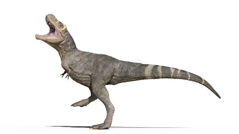 T-Rex dinosaur, Tyrannosaurus Rex gad, prehistoryczny Jurajski zwierzę chodzi tupiąc na białym tle, 3D rendering ilustracji