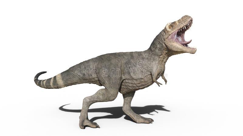 T-Rex dinosaur, Tyrannosaurus Rex gada huczenie, prehistoryczny Jurajski zwierzę odizolowywający na białym tle, 3D rendering ilustracji