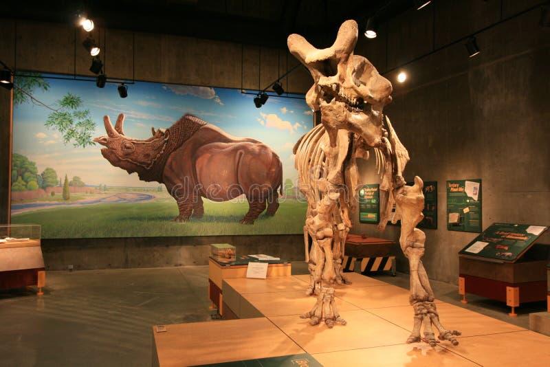 T.Rex het Centrum van de Ontdekking stock afbeeldingen
