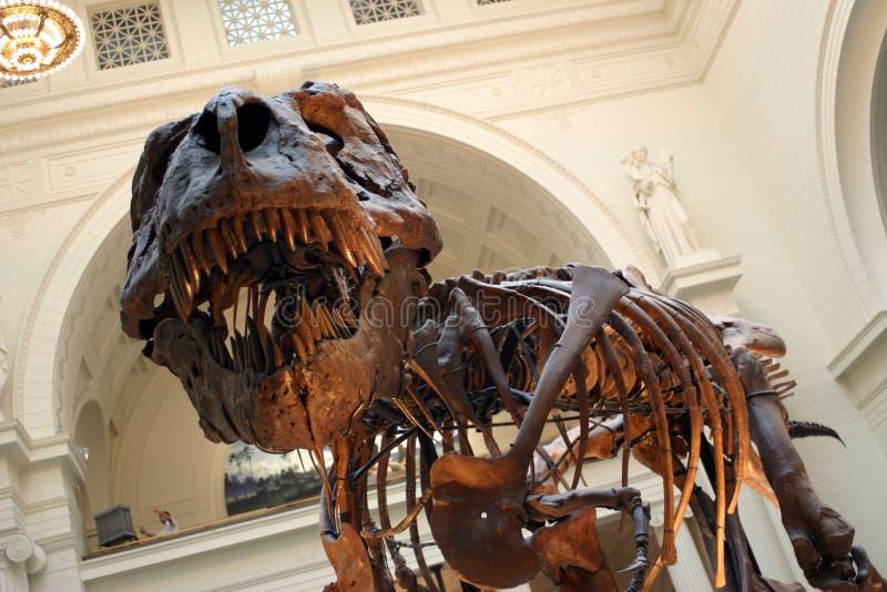 T Rex Skelet stock foto's