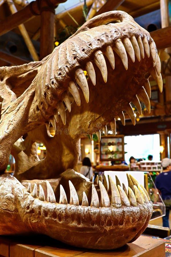 T-Rex tyrannosarie Rex Skeleton royaltyfri fotografi