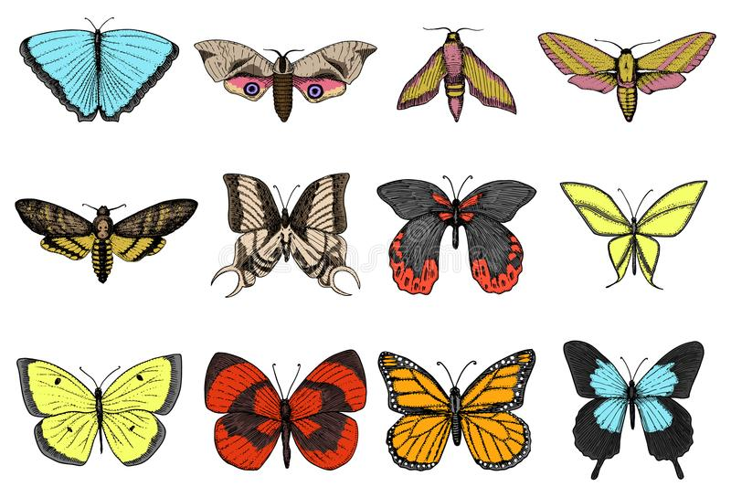 T-shirt de tatouage ou de boho ou conception scrapbooking Symbole ésotérique mystique de la liberté et du voyage Papillon ou inse illustration libre de droits