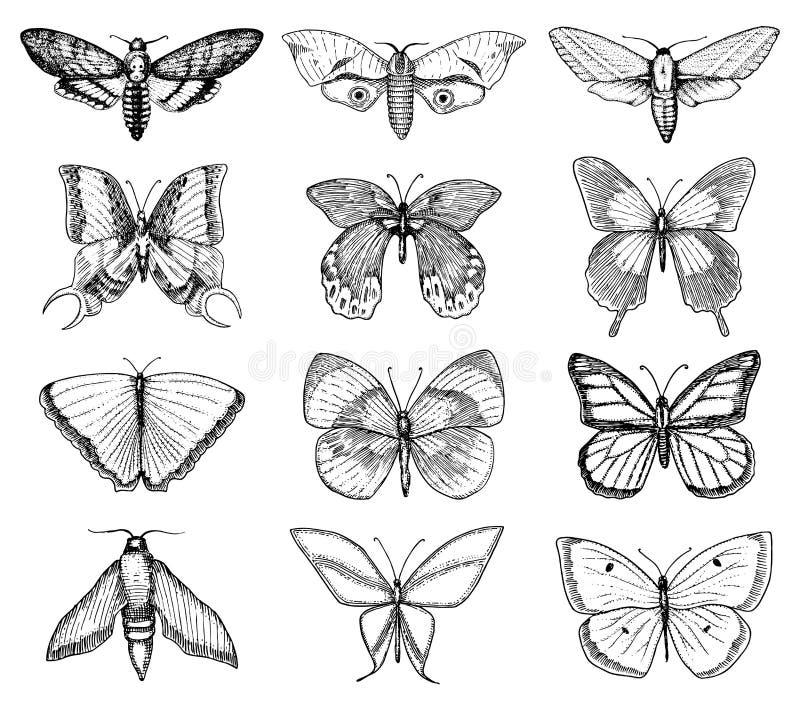 T-shirt de tatouage ou de boho ou conception scrapbooking Symbole ésotérique mystique de la liberté et du voyage Papillon ou inse illustration de vecteur