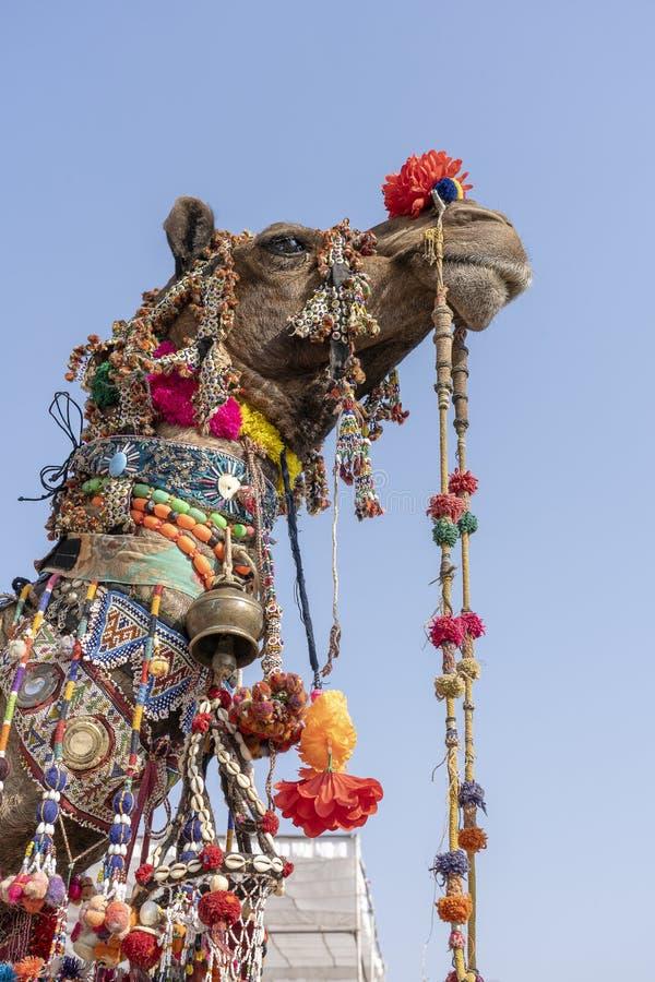 T?te d?cor?e d'un chameau dans le d?sert Thar pendant la foire de chameau de Pushkar, R?jasth?n, Inde Fin vers le haut photographie stock